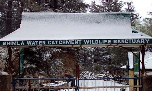 Shimla Catchment