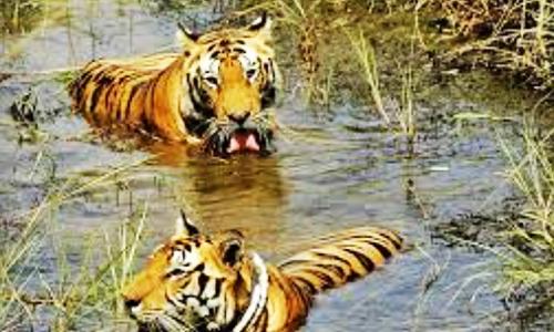 Gandacherra Wildlife Sanctuary
