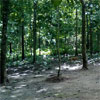 Maredumilli deer park